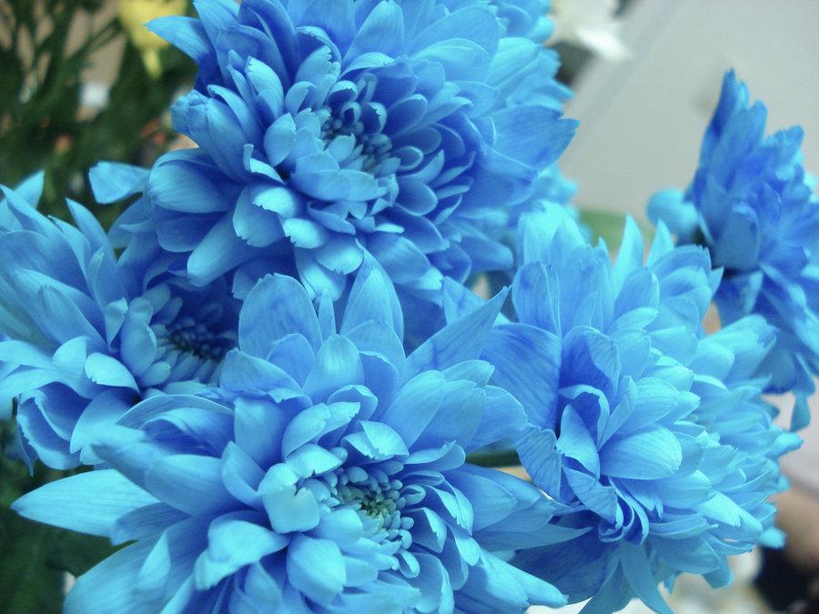 Image from www.pozecuflori.weebly.com