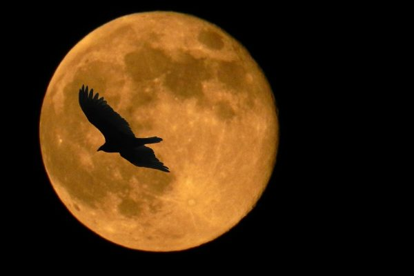It's the last Full Moon of 2019. Here's what you need to know!