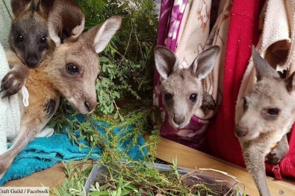Calling All Crafters – Australia's Injured Wildlife Need You!