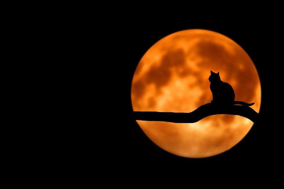 Full Moon Ritual For The October Blue Moon