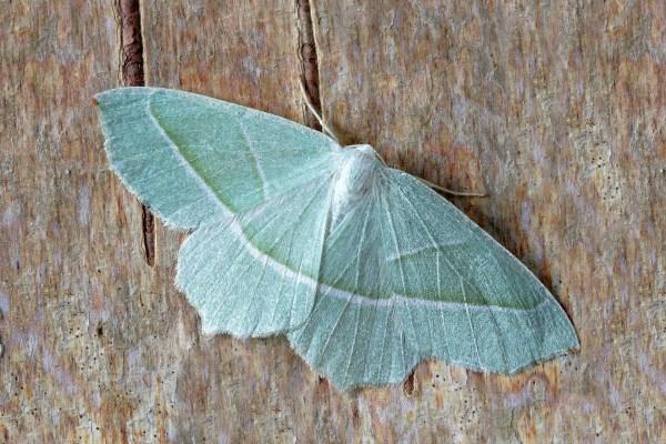 The Very Sad Moth Story